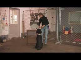 Büyükçekmece köpek pansiyonu
