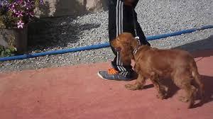 Ataşehir köpek eğitim
