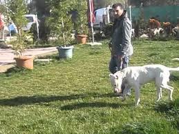 Köpek Pansiyon Tesisleri