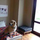 Kedi köpek oteli İstanbul Avrupa Yakası