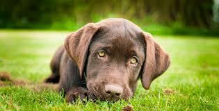 Çatalca köpek pansiyonu