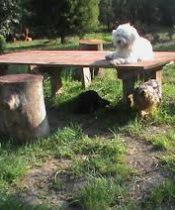 Köpek Oteli Yeşilköy