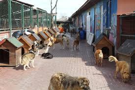 Çekmeköy köpek pansiyonu