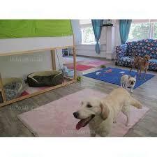 Erenköy köpek pansiyonu
