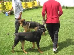 Köpek Eğitim Okulları