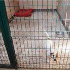 Ucuz köpek pansiyonu İstanbul