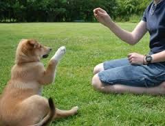 Evinizde köpek eğitimi