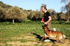 Avrupa Yakası Köpek Eğitimi