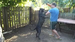 Adalar köpek eğitim