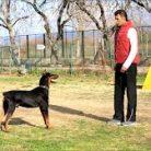 En profesyonel köpek eğitimi