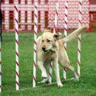 Köpek Eğitiminde Ödül