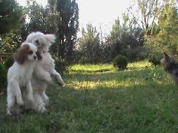 Esenyurt Köpek Eğitimi