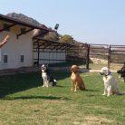 Adalar Köpek Eğitim Çiftliği