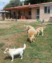 Beykoz Köpek Oteli
