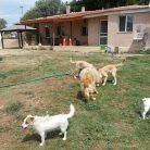 Bağcılar Köpek Eğitim Çiftliği