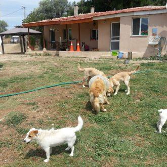 Bağcılar Köpek Oteli