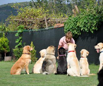 Bayramoğlu Köpek Pansiyonu