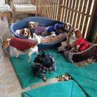 Bahçelievler Köpek Oteli