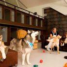 Büyükçekmece Köpek Oteli