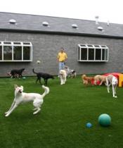 Çatalca Köpek Oteli