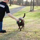 Esenler Köpek Eğitim Merkezi