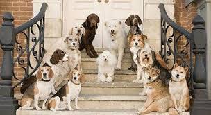 Beyoğlu Köpek Pansiyonu