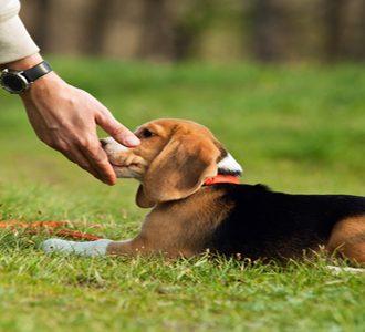 Şişli Köpek Pansiyonu En İyisi