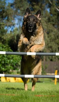 Etiler Köpek Pansiyonu