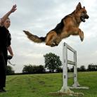 Bağcılar Köpek Eğitimi