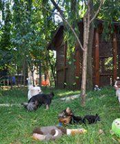 Avcılar Köpek Oteli