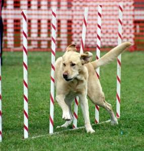 Beyoğlu Köpek Eğitimi
