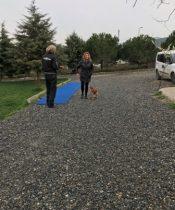 Büyükçekmece Köpek Oteli İstanbul