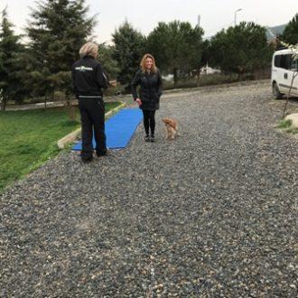 Beykoz Köpek Pansiyonu