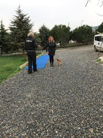 Temel Köpek Eğitimi Nasıl Verilir