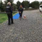 BerneseMountainDog Köpek Eğitimi