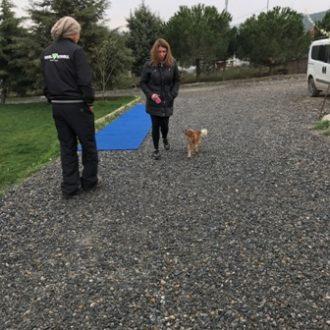 Rottweiler İtaat Eğitimi Nasıl Verilmeli