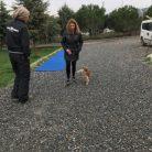 Pomeranianboo Satılık Yavru istanbul