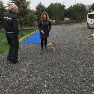 Pomeranianboo Satılık Yavru İstanbul