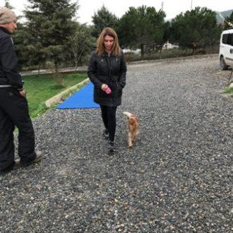 Caddebostan Köpek Eğitimi
