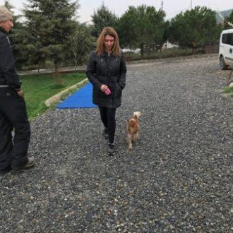 Setter Köpek Eğitimi Nasıl Verilmeli?