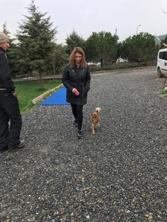 Av Köpekleri Eğitimi