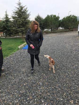 Harem Köpek Eğitimi