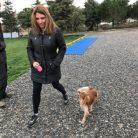 TibetanMastiff Köpek Eğitimi