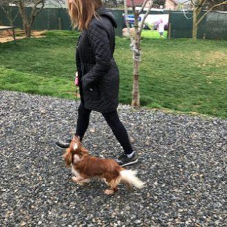 Terrier Köpeklerinin Bakımı