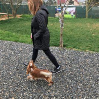 TerrierMaltese Köpek Eğitimi