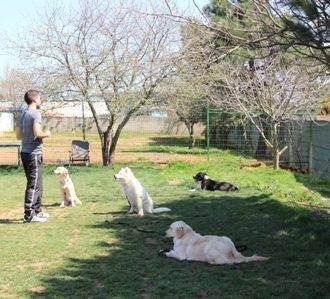 Silivri Köpek Eğitim Merkezi