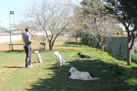 Eyüp Köpek Eğitimi