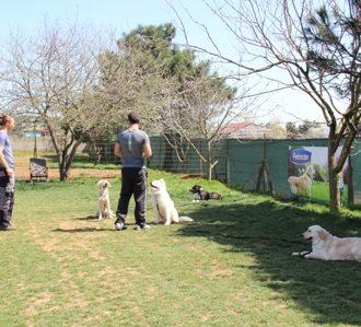 Gaziosmanpaşa Köpek Eğitim Çiftliği