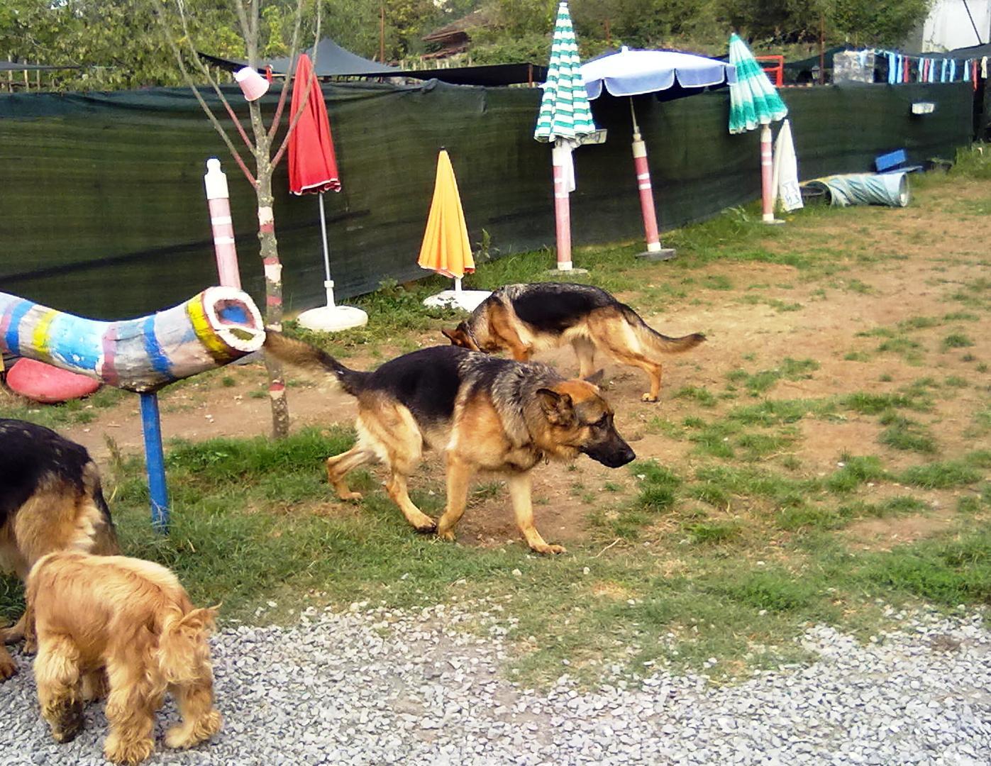 Çekmeköy Köpek Eğitim Çiftliği