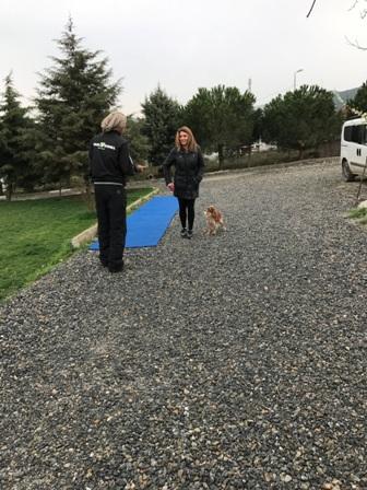 ChowChow Köpek Eğitimi